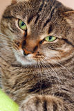 Cat on green Royalty Free Stock Photo