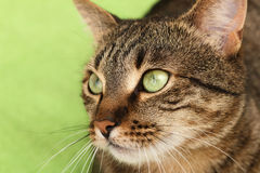 Cat on green Royalty Free Stock Photography