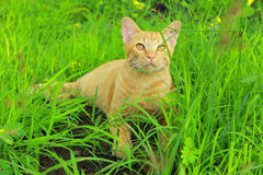 A cat with green background Royalty Free Stock Image