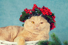 Cat with green Christmas wreath Stock Photo