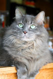 Cat with green eyes. Portrait of cute cat wit green eyes Stock Photos