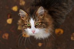 Cat with green eyes. Looking up Stock Photography