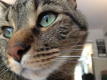 Cat with green eyes. Close-up of cat with green eyes Stock Photography