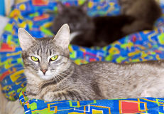 Cat with green eyes lying on a colorful blanket Royalty Free Stock Photo