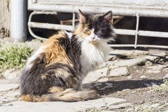 Cat with green eyes  sitting and relaxing outdoor Royalty Free Stock Photography