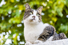Cat with green eyes  sitting and sunbathing Royalty Free Stock Photos
