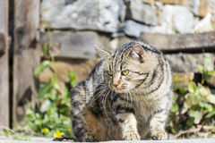 Cat with green eyes stalking Stock Images