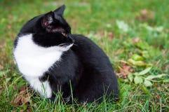 Cat in green field. Black cat is walking in green field Royalty Free Stock Photos
