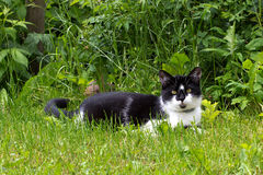 Cat. On the green garden royalty free stock images