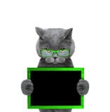Cat in green glasses keeps frame in its paws. Isolated on white background stock photo
