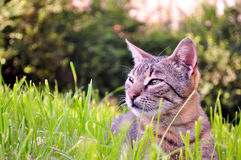 Cat in the green grass Stock Images