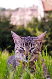 Cat in the green grass Royalty Free Stock Images