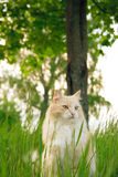 A cat in green grass Stock Images