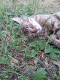 Cat green grass animal pets Royalty Free Stock Photography