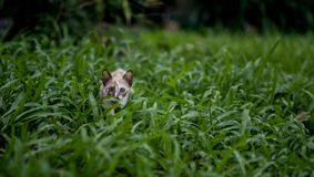 Cat on green grass Stock Photos