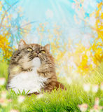 Cat in green grass in garden, close up Royalty Free Stock Photo
