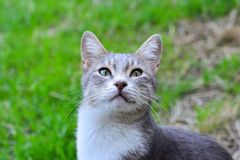 Cat on green grass in garden Royalty Free Stock Images
