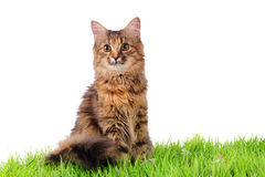 Cat on green grass Stock Photo