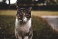 Cat, Green, Green Eyes, Animal Stock Images