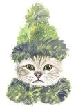 Cat in green hat and scarf Royalty Free Stock Images