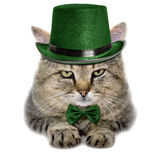 Cat in a green hat and tie butterfly isolated on white backgroun Royalty Free Stock Image