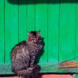Cat and green house. Cat near the old wooden green house Stock Photography
