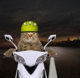 Cat ride a motorbike on the highway royalty free stock photo