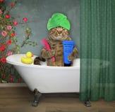 Cat in turban takes a bath stock photo