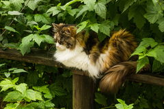 Cat in greens Royalty Free Stock Image
