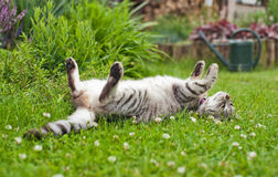 Cat. Grey cat relaxing in the garden Royalty Free Stock Images