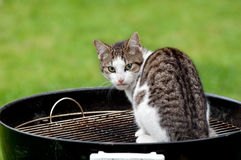 Cat on grill Royalty Free Stock Photos