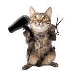 Cat Groomer With Dryer and Scissors. A cute cat groomer sitting up and holding a hair dryer and cutting shears stock photo