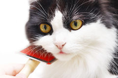 Cat grooming. Isolated on white Stock Images