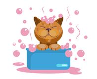 Cat grooming. Cat wash. Funny muzzle vector illustration