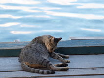 Cat by ocean Royalty Free Stock Images