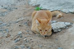 Cat on ground Stock Images