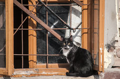 Cat at grunge window Stock Images