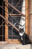 Cat at grunge window Royalty Free Stock Image