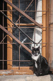 Cat at grunge window Royalty Free Stock Images