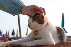 Cat Guardian Island images stock