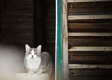 Cat Guarding the country house ! Royalty Free Stock Photography