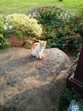 Cat of Gucheng Park in Shanghai stock image