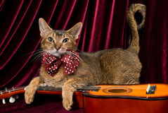Cat with guitar. In studio Royalty Free Stock Images