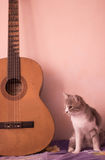 A cat and the guitar Stock Photography