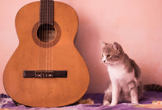 A cat and the guitar Stock Images