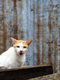 A cat. Had a sound Royalty Free Stock Images