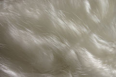 Cat Hair royalty free stock photo