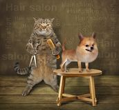 Cat hairdresser and dog stock photography