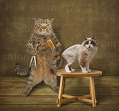 Cat hairdresser and his client Royalty Free Stock Images