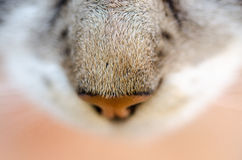 Cat hairy nose closeup. Interesting shot of the curious cat who came closer to the camera Stock Photo